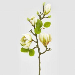 Magnoliagren - 66 cm
